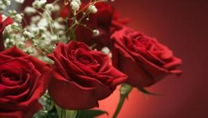 635877836032244949-roses